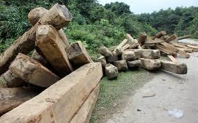 Sở nông nghiệp và phát triển nông thôn kết luận nội dung tố cáo đối với Hạt kiểm lâm Hương Sơn.
